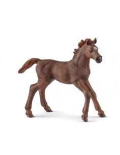 Schleich Wild Life English thoroughbred foal Schleich 13857 - 1