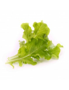 veritable-nbbx23xxxxvb-kasviksen-siemen-lehtisalaatti-1.jpg